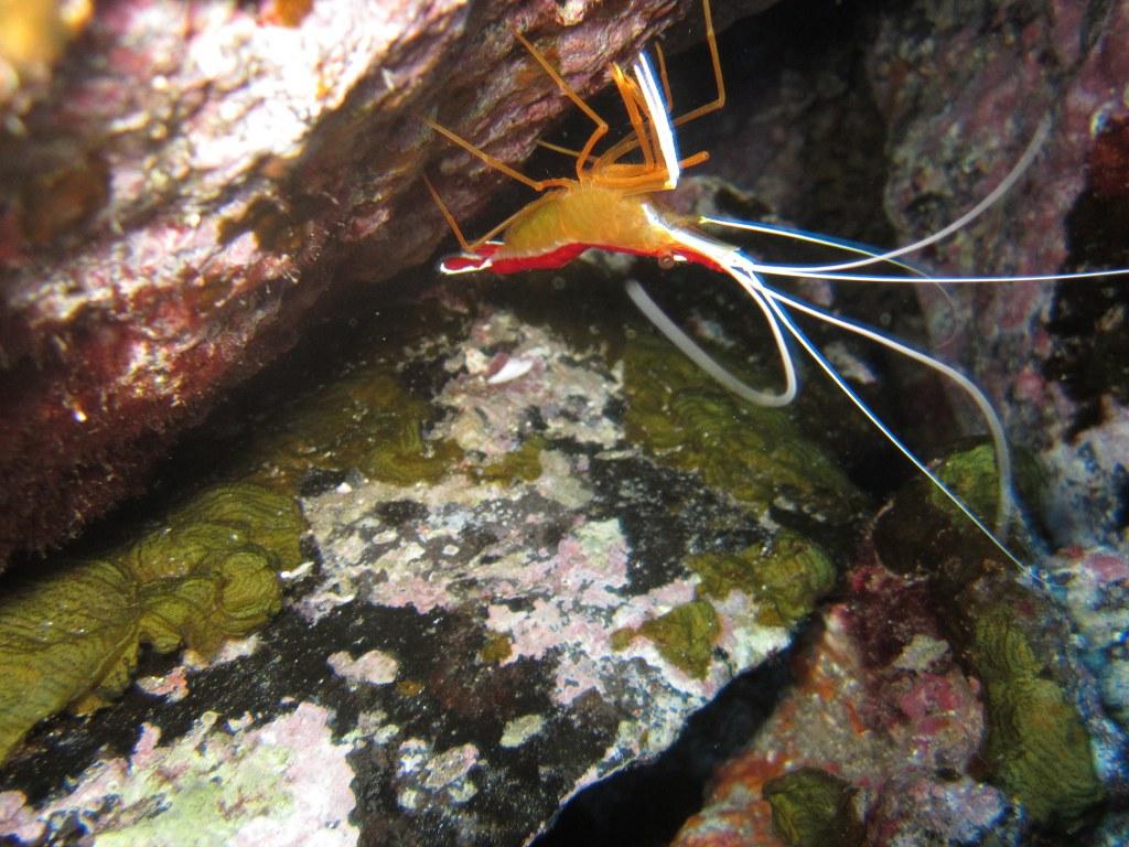 Diving-tenerife-Playa-Negra-7