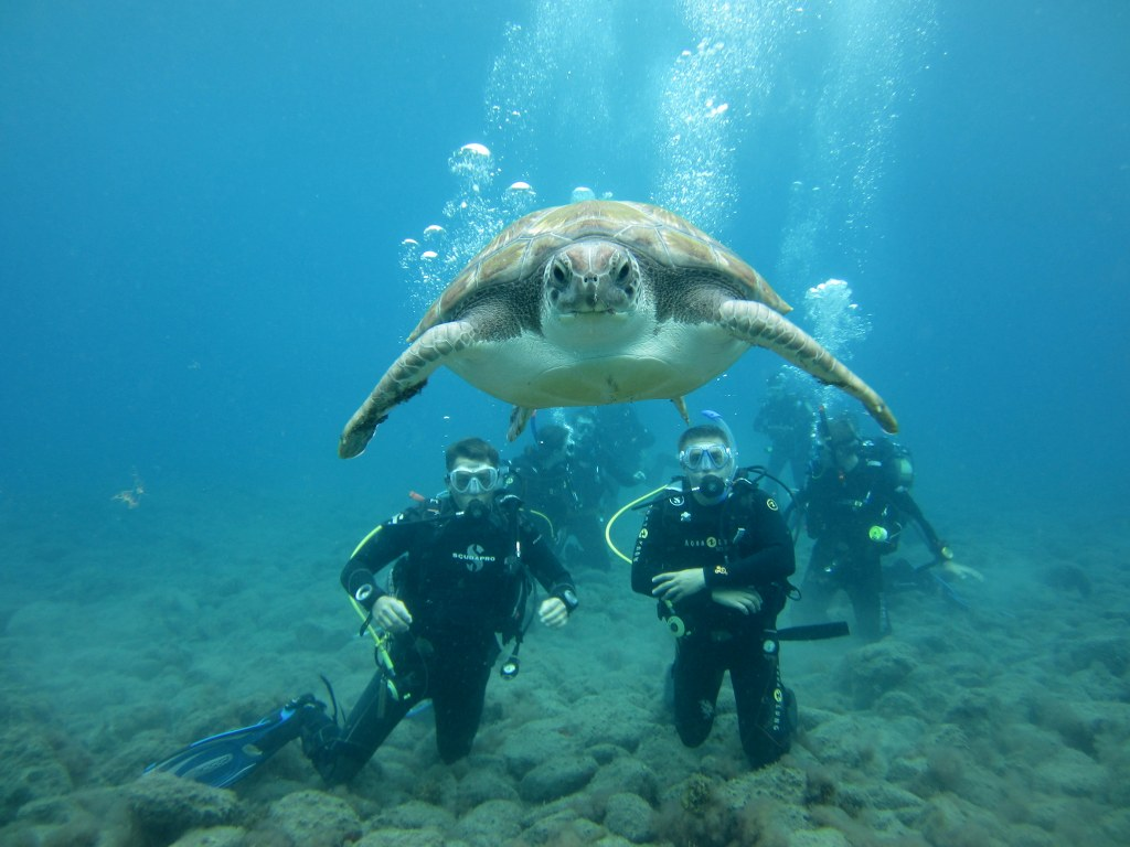 El-Puertito-Turtle-Divers