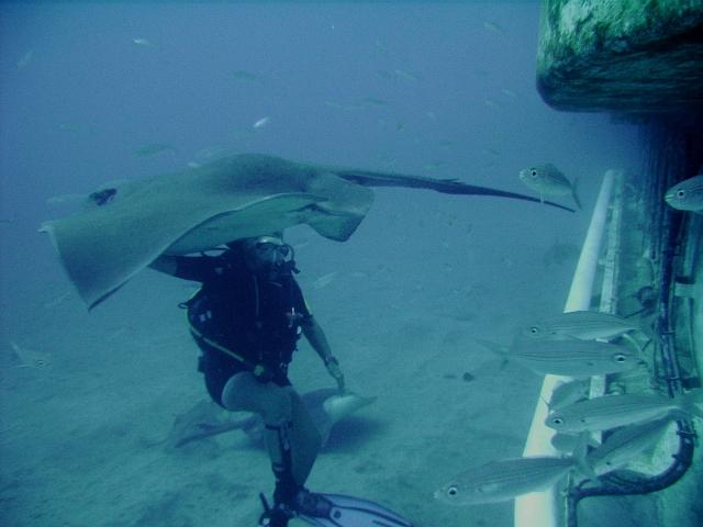 Submarine_diving_tenerife22