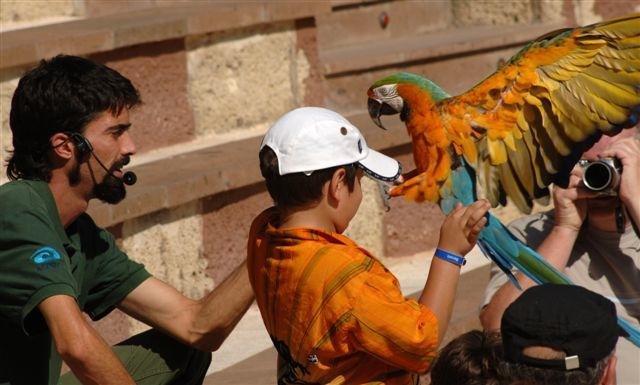 Tenerife-Excursions-Jungle-Park-3