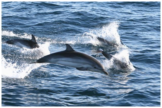 Tenerife-Excursions-Royal-Delfin-3