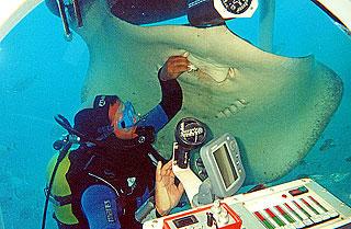 Tenerife-Excursions-Submarine-Safari-4