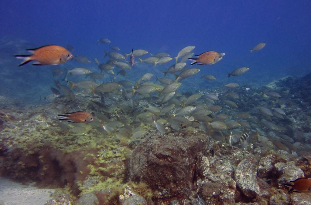 diving-tenerife-Abades-Bay-10