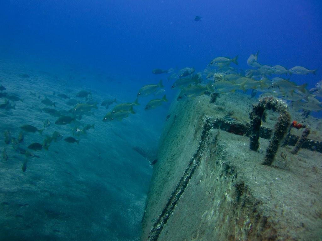 diving-tenerife-Las-Eras-Common-Bream