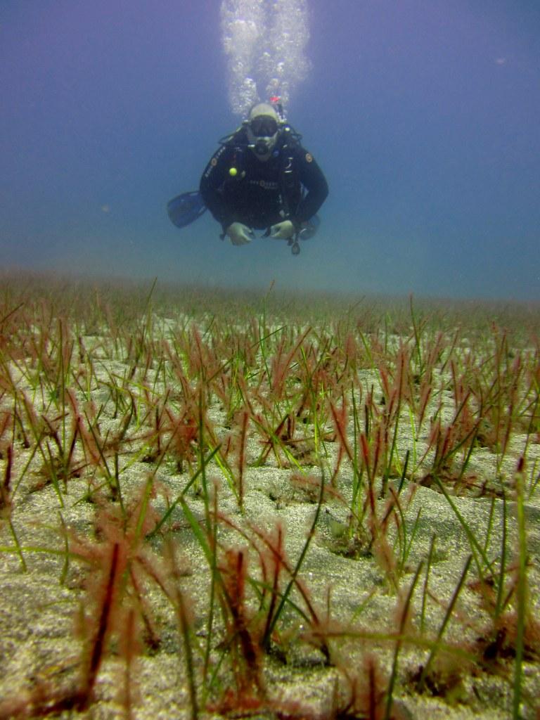 diving-tenerife-Pequeño-Valle-Seagrass