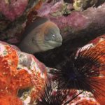 diving-tenerife-morena-cueva-moray