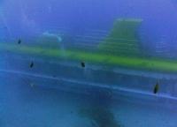 diving_tenerife_submainr_dive2