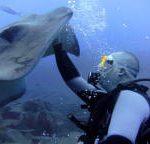 tenerife_diving_sting_rays_2