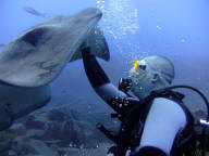 tenerife_diving_sting_rays_2