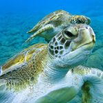 turtle-tenerife-diving tenerife