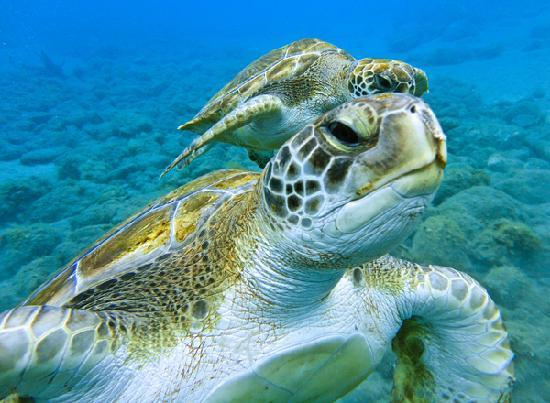 turtle-tenerife-diving tenerife